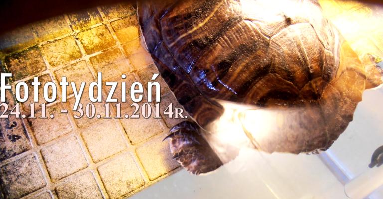 Fototydzień 24.11. – 30.11.2014r.