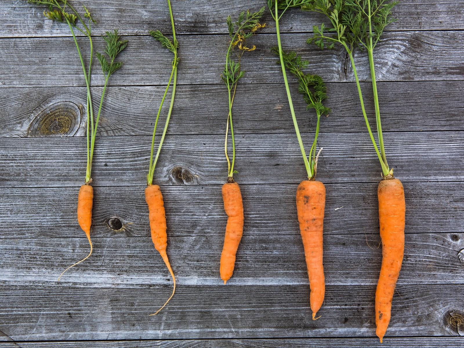 Zdrowe nawyki - chrup marchewkę